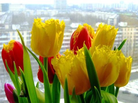 С наступающим  праздником Весны, милые женщины!!! С 8 марта!!!