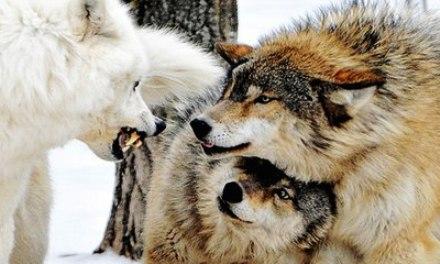 Романтики и однолюбы животного мира, которые нерушимо хранят клятву «быть вместе, пока смерть не разлучит нас»