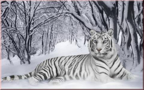 "найти схему ""Белый тигр""."