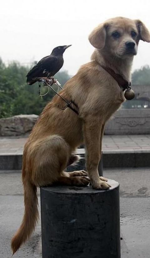 КОШКИН ДОМ. Дружба у животных