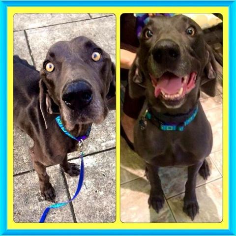 История спасения истощенной собаки, которая много перенесла в жизни