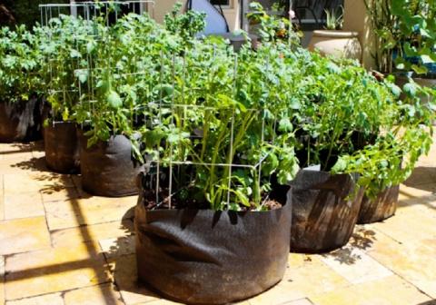 Выращивание картофеля в пластиковых мешках