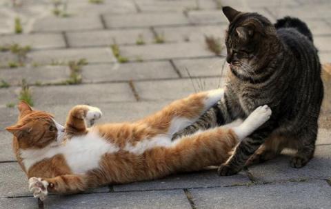 Позитив в фотографиях с животными
