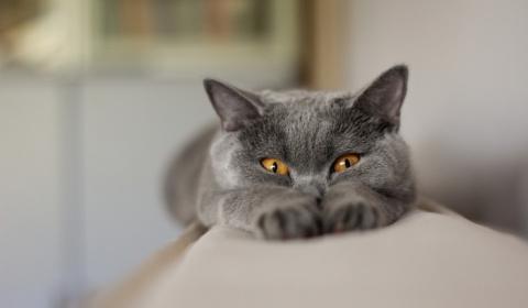 Ученые объяснили, как кошки …