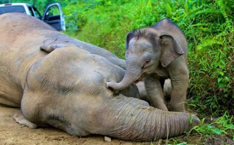 Слоновая кость уже не в моде. Вот ради чего теперь истребляют этих гигантов!