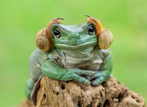 Эти очаровательные лягушки