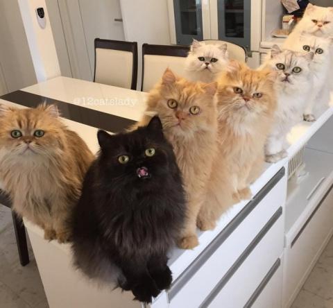 «Кошачья мама на полный день…