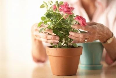 Какие цветы нужно держать до…