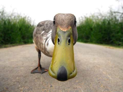 Кто придумывает новости или откуда берутся «газетные утки»?