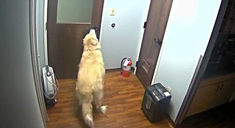 «Миссия невыполнима»: пёс открыл три двери и сбежал из приюта