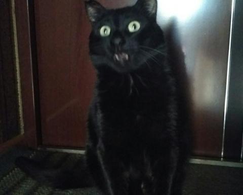 """""""Вкусно кормите своих котиков!"""""""