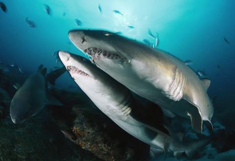 Они размножаются! 5 фактов о сексе акул, которые ты точно не знали!