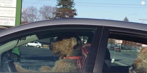 Пёс очень не хотел оставатьс…