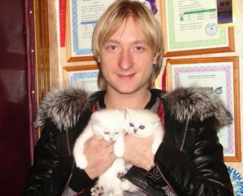 Кошки знаменитостей, какие они?