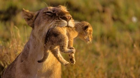 Детеныши животных и их родители
