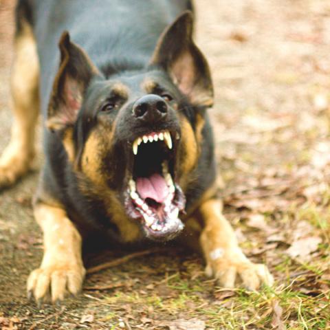 Если на вас напали бродячие собаки. Игровая площадка для котов - шедевр!