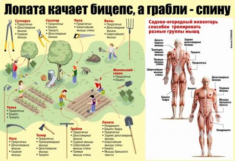 Дачный фитнес: качаем мышцы лопатой и сучкорезом
