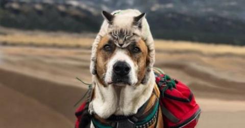 Любители путешествий пёс Ген…