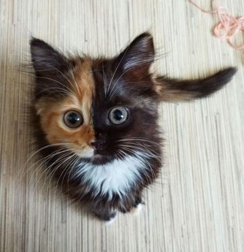 Яна - кошка с двумя лицами