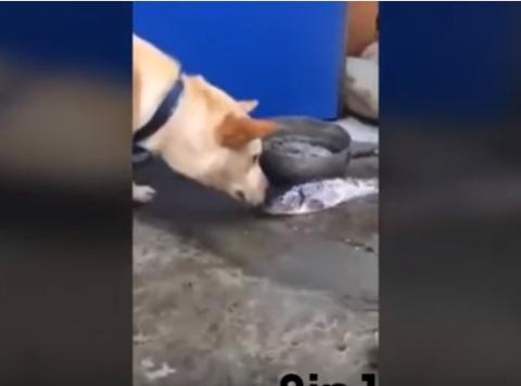 Рыбий спасатель