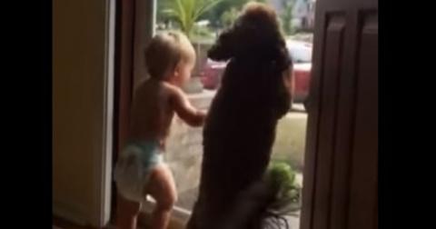Малыш и щенок увидели, что п…