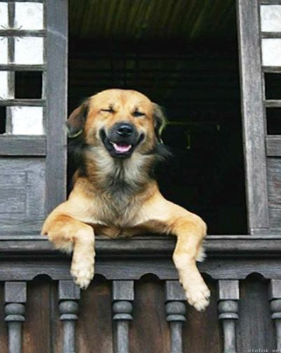 У друзей собака никак не лаяла на звонок в дверь. И решили они провести показательный урок...