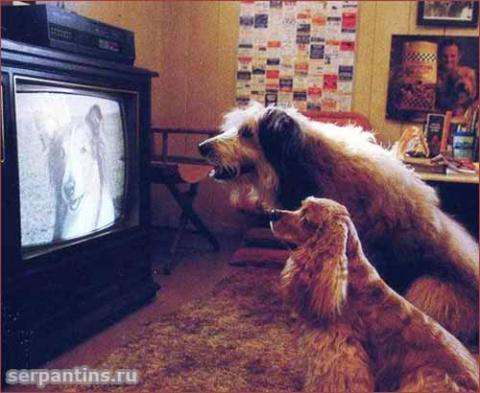 Телевидение для собак