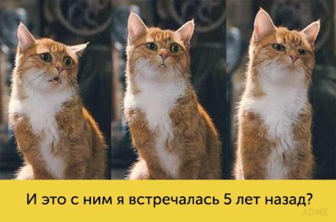 Коты, которые в тысячу раз э…