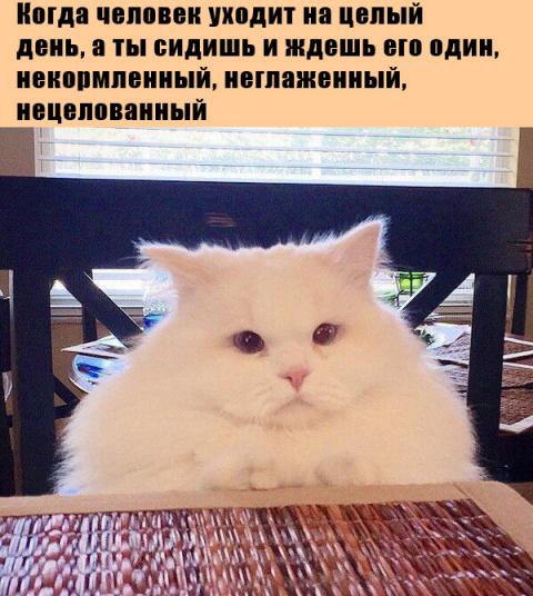 Смешные и милые животные для поднятия настроения