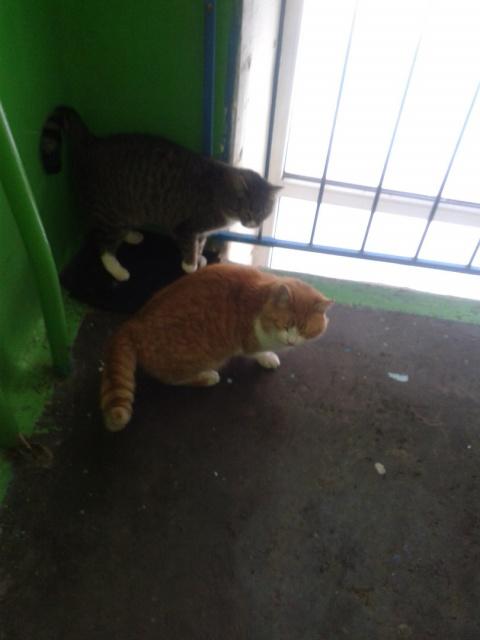 После смерти бабушки кошек в…