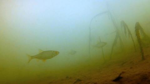 ПЛОТВА не АТАКУЕТ ПРИМАНКУ! Подводные съемки на р.Кинель