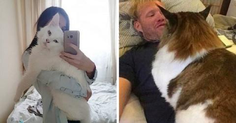 Хорошего кота должно быть много!