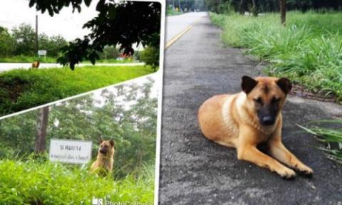 Эта верная собака целый год ждала своих хозяев на обочине