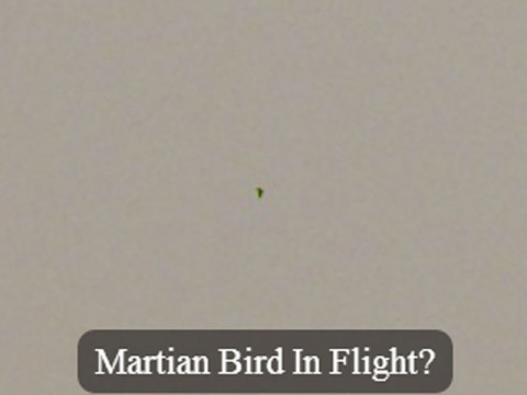На Марсе засняли зеленую птицу