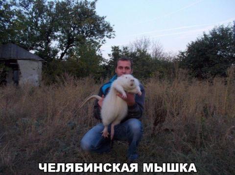Это же Челябинск, детка!
