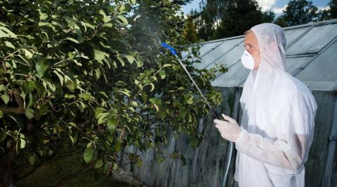Как защитить яблоню и грушу …