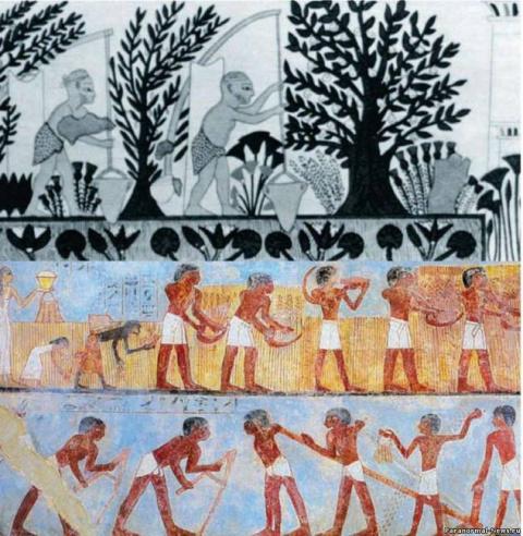 Кто обучил человечество земледелию и сельскому хозяйству?