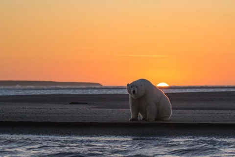 Девушка оправилась на Аляску…
