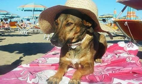 Пляж для собак открылся в Италии