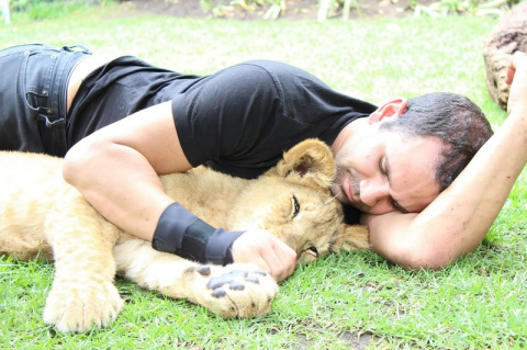 Тигр спас человека от леопарда
