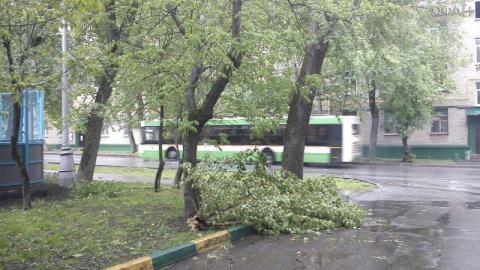 Московский ураган обрушил пи…