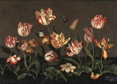 Самый красивый тюльпан в истории
