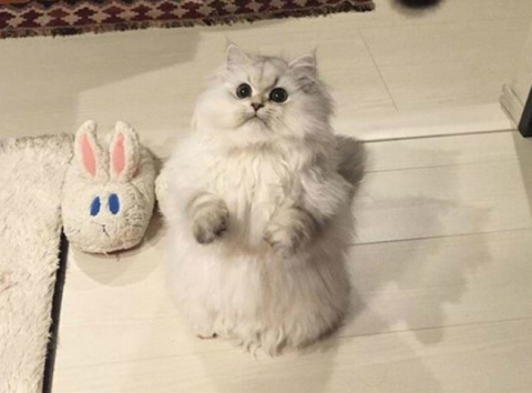 19 бесподобных котов, которые родились, чтобы прославиться