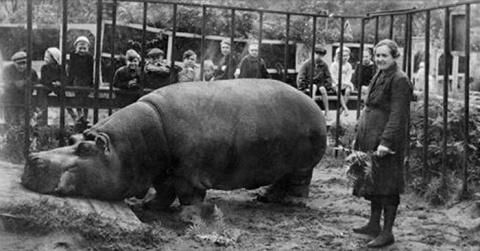 Зоопарк особого назначения