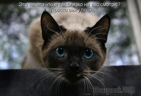 """""""Коты и др."""" (2-я часть)"""