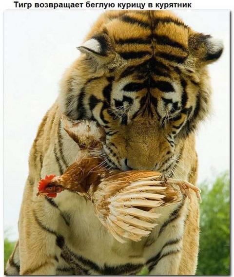 Взаимопомощь животных. Всем добра!