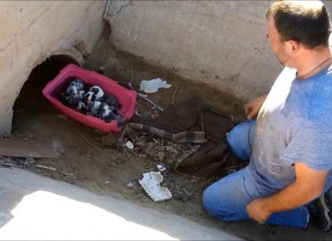 История спасения щенков, которые родились в дренажной трубе