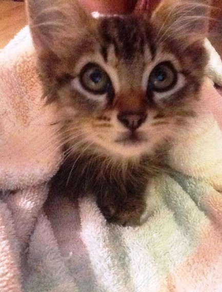 Котик притащил домой уличного котенка. Он явно решил, что эта кроха теперь будет жить тут!