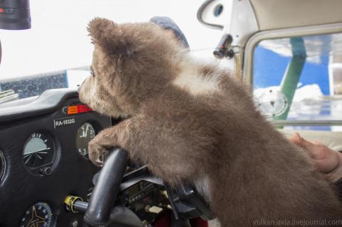 Медвежонок-подкидыш стал вто…