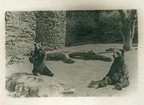 Звери московского зоопарка, 1940 год